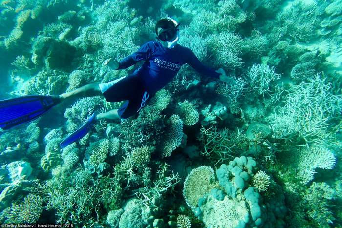 Подводный мир Мальдивских островов