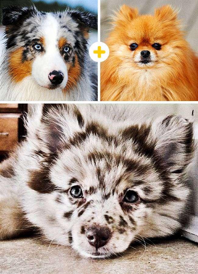 15 очаровательных собак, которые получились в результате неожиданных сочетаний