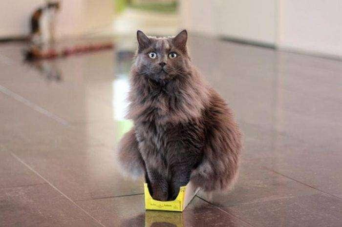 Даже в самые маленькие коробка, кошки