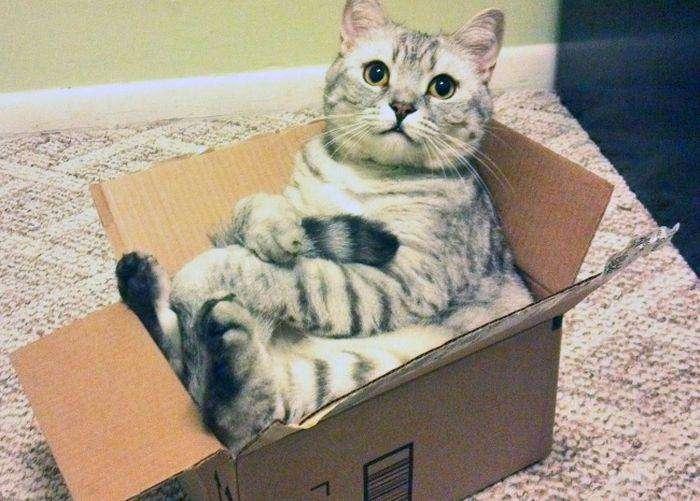 И делают они это очень изящно коробка, кошки