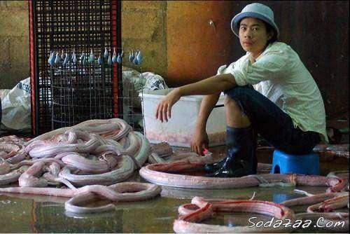 Змеебойня (10 фото)