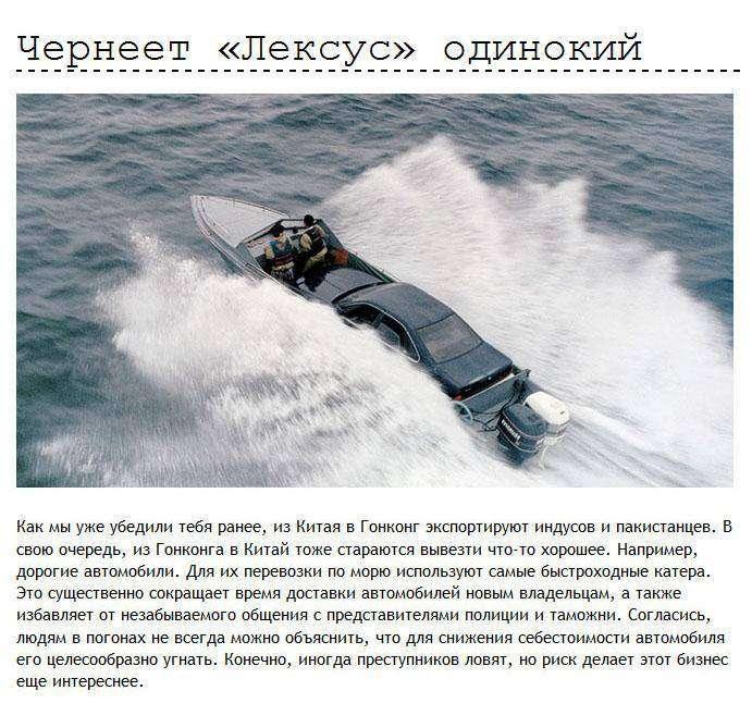 Неудачи контрабандистов и нелегалов (13 фото)