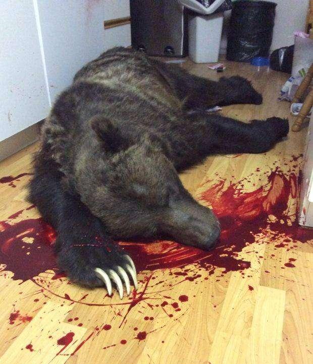 Медведь забрался посреди ночи на кухню, чтобы перекусить (3 фото)
