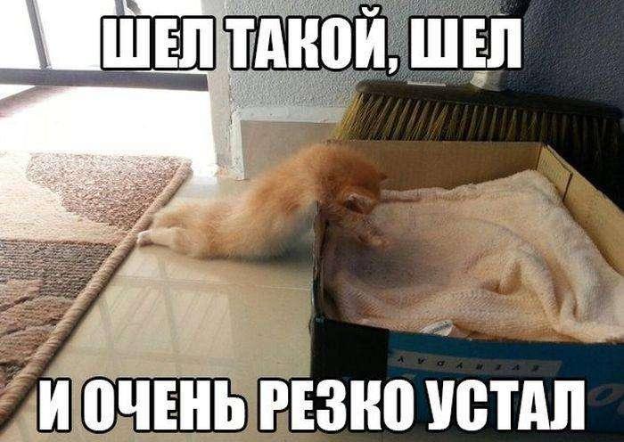 Подборка прикольных фото №1193 (104 фото)