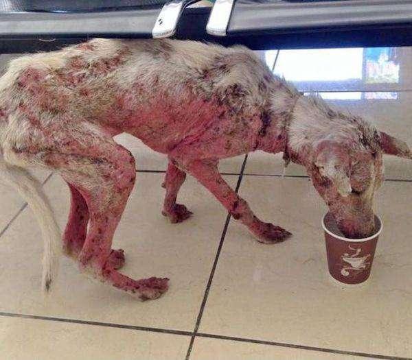 Счастливая случайность бедного пса (11 фото)