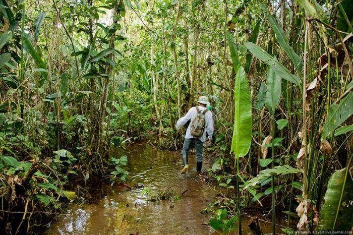 Если в джунглях закончиласть еда (9 фото)