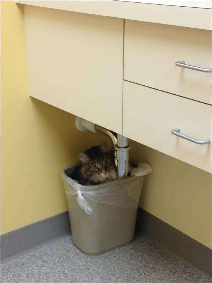 Коты, которые поняли, что их привезли к ВЕТЕРИНАРУ! (14 фото)