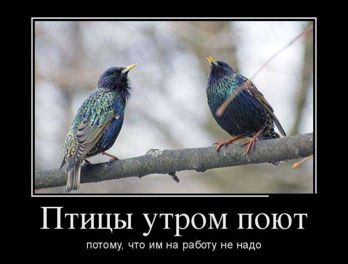 Демотиваторы №1151 (30 фото)