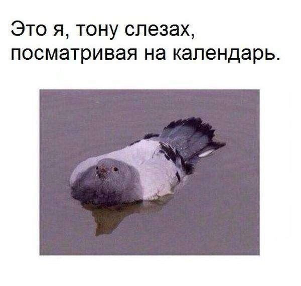 Подборка прикольных фото №1205 (91 фото)