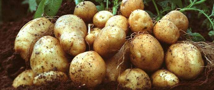Американец зарабатывает $10 000 в месяц на рассылке картошки с анонимными посланиями