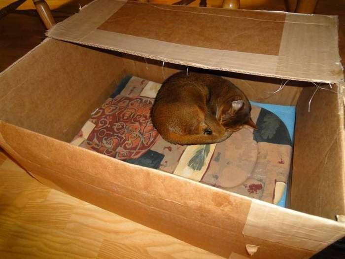 Способ согреться коробка, кошки