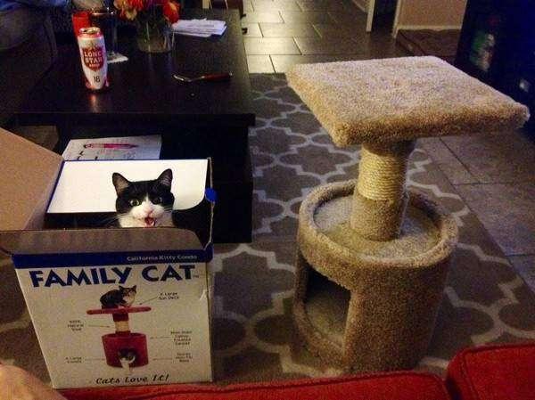 Даже когда есть альтернатива коробка, кошки