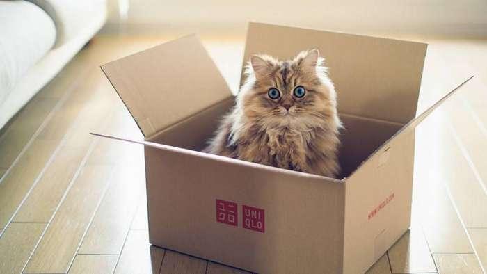 Почему кошки так любят коробки коробка, кошки