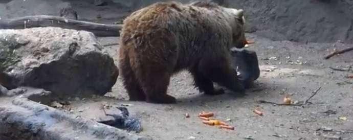 Медведь-спасатель
