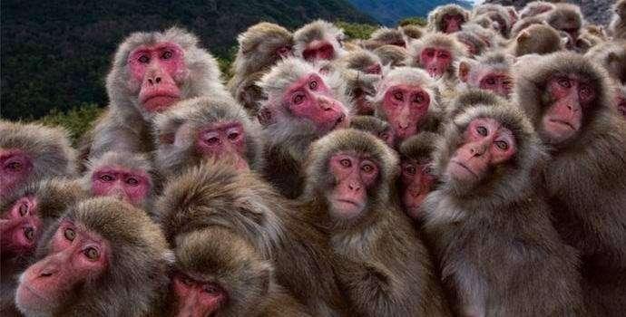 В китайской армии начали служить обезьяны