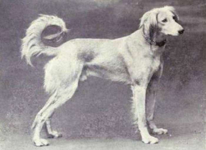 Как изменились собаки за последние 100 лет (23 фото)