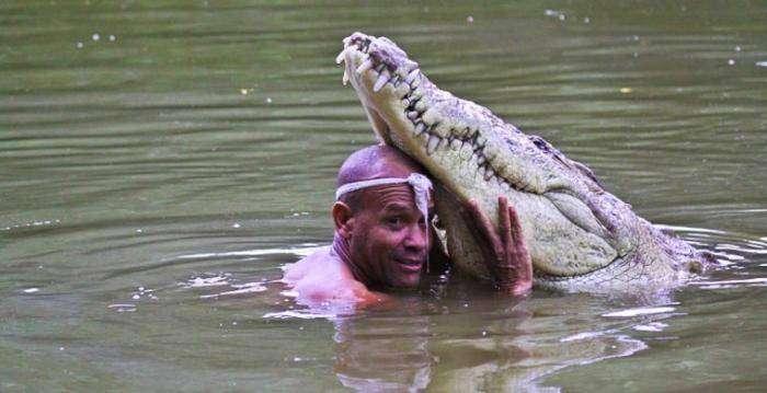Как укрощают строптивых крокодилов (8 фото)