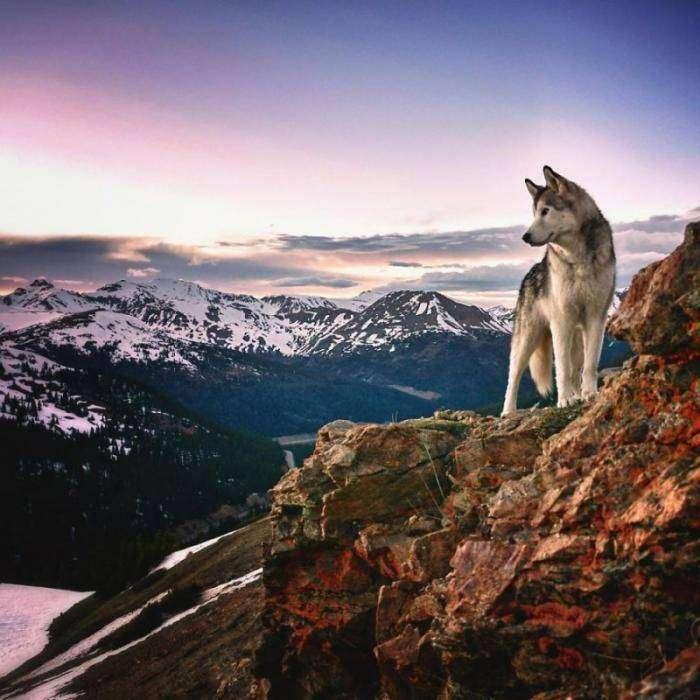 Я путешествую по миру со своим псом, потому что не могу видеть, как собак запирают дома (17 фото)