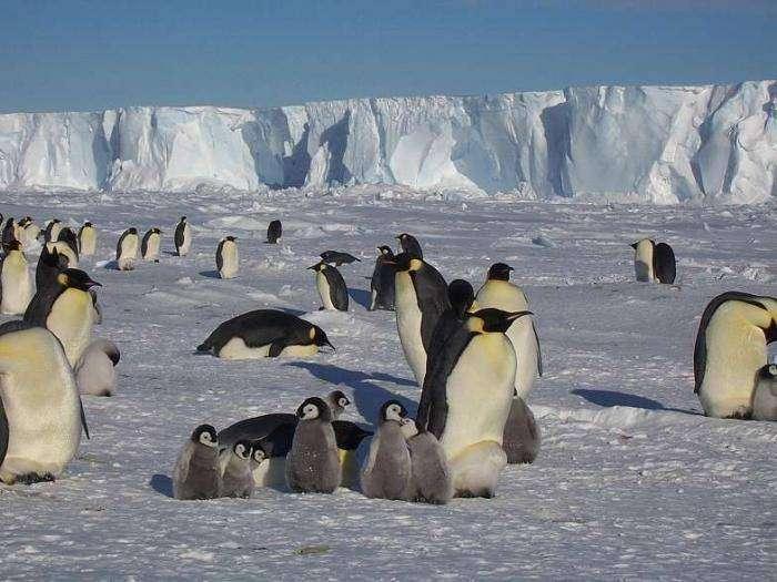 Антарктида (27 фото)