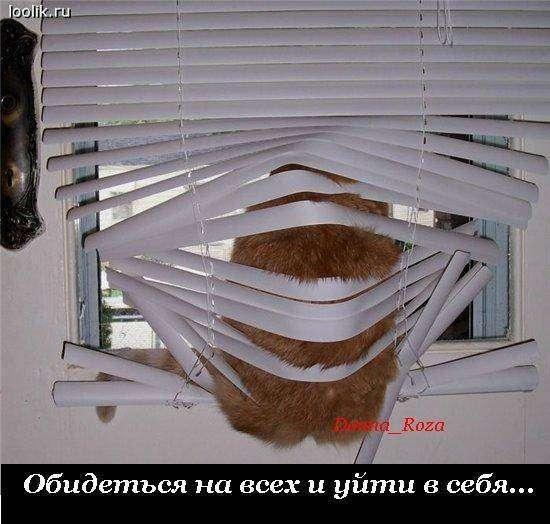 Обязанности домашних котов (22 фото)