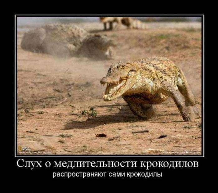 Демотиваторы на 16.09.2015г (30 фото)
