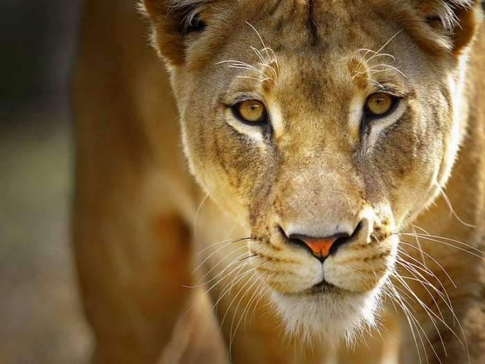 10 самых жестоких матерей среди животных. Их любовь к потомству бывает смертельной