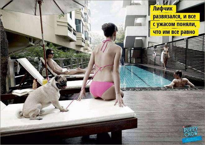 собачий секс фото: