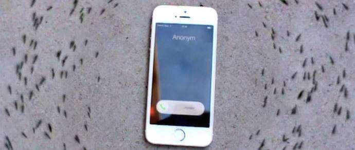 Видеофакт: муравьи выстроились в хоровод вокруг iPhone