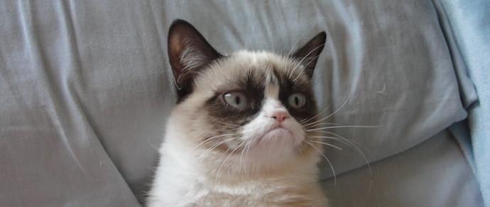 Коты более независимы, чем псы, и не скучают по своим хозяевам
