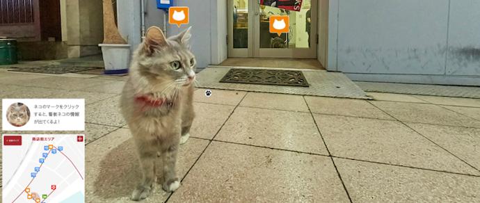 В Японии разработали сервис Cat Street View — панорамы улиц для котиков