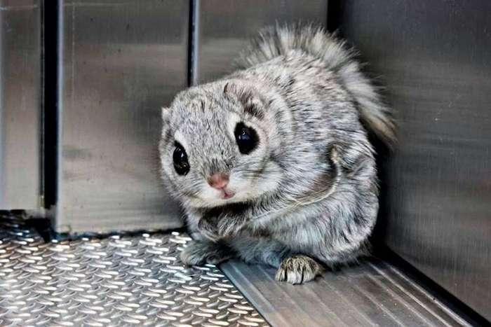 Ученые показали самых крошечных и милых животных Земли.
