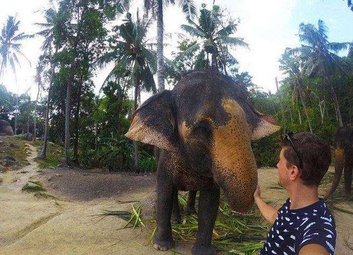 Слон сфотографировался с туристом на память (4 фото)