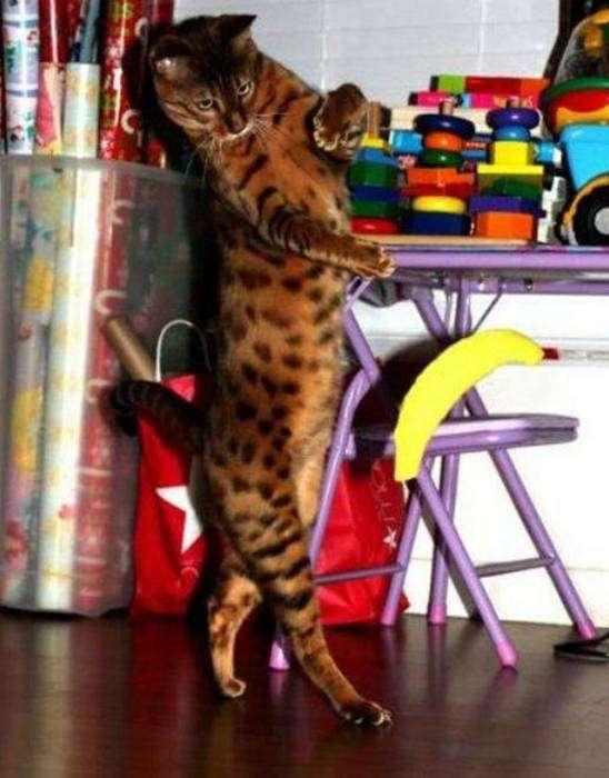 Первый в мире кот-репер.
