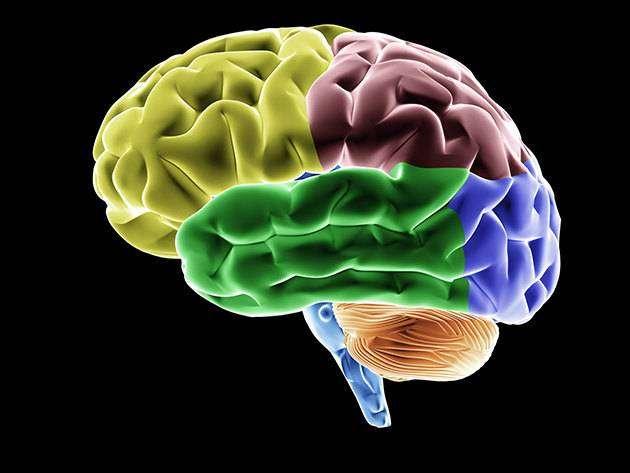 5 научных доводов, почему умным быть плохо