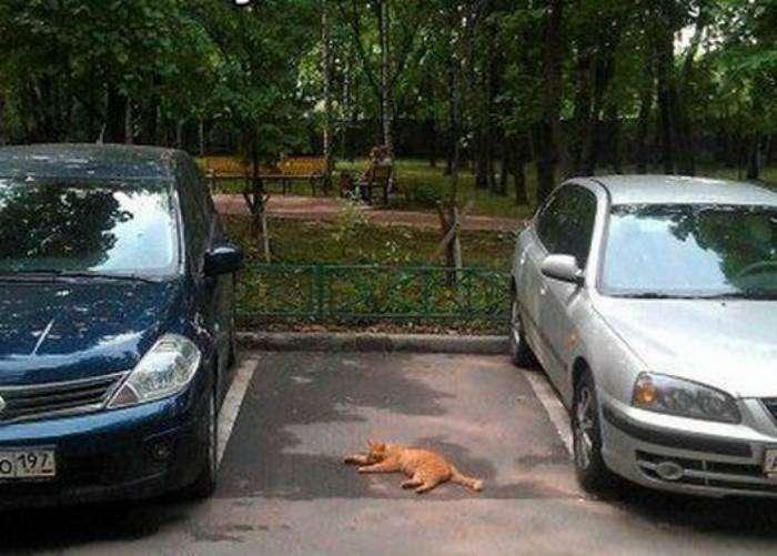 Это место охраняет рыжий кот Василий.
