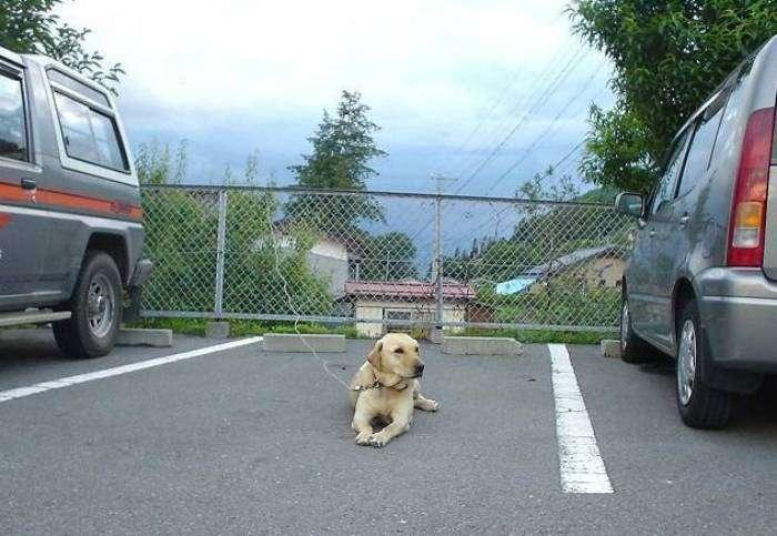 «Осторожно злая и очень голодная собака!»