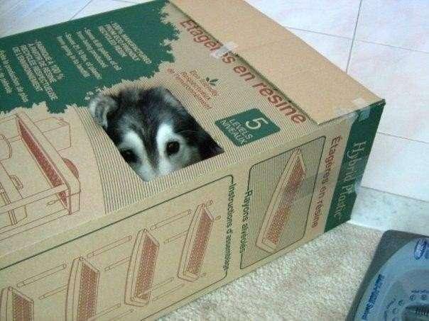 Талли — пес, который был воспитан кошками( 8 фото)