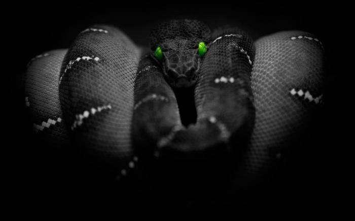 Американцы разработали универсального помощника - змею-робота (3 фото)