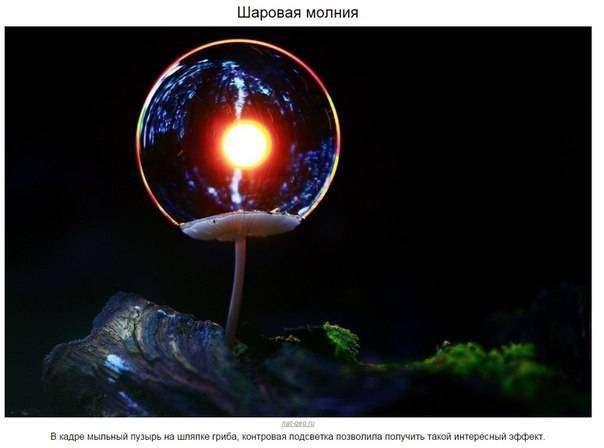 Дикая природа (10 фото)