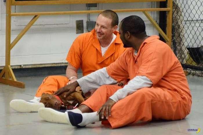 Эксперимент в тюрьмах США