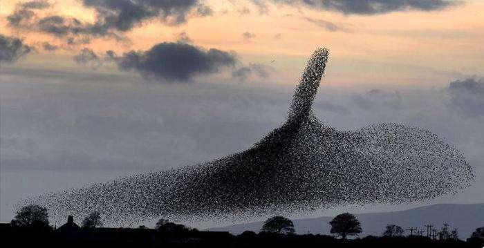 Загадки природы, которые удалось разгадать ученым (23 фото)
