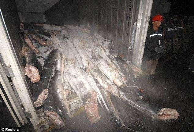 Кокаин в акулах (6 фото)