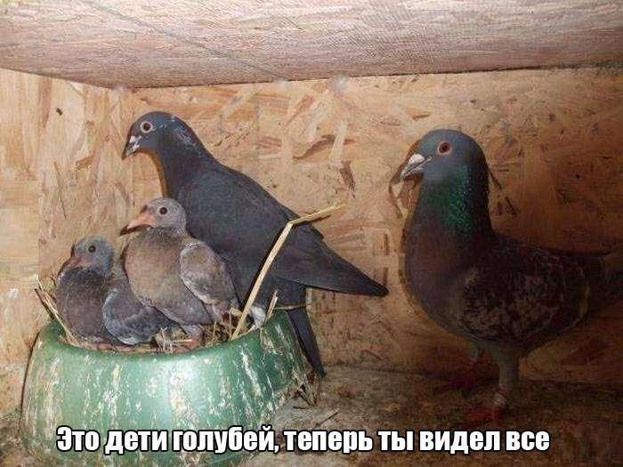 Подборка прикольных фото №1264 (105 фото)