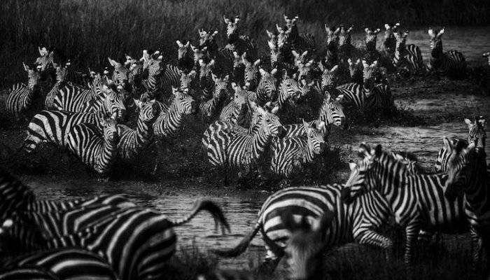 Семейные портреты дикой Африки (8 фото)