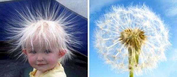 Когда фантазия находит забавные сходства (20 фото)