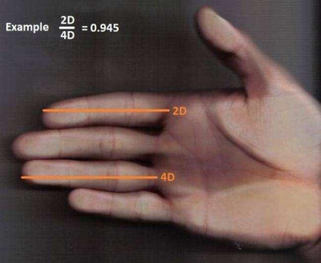 ТОП-10 ложных способа определения размера пениса (10 фото)