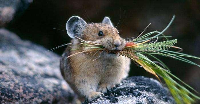 Будущее человечества на примере мышей (2 фото)