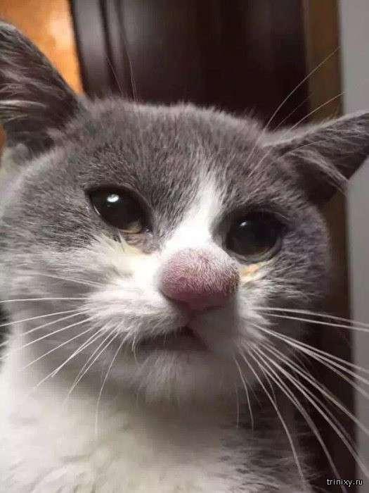 Коты, пытавшиеся ловить пчел или ос (20 фото)