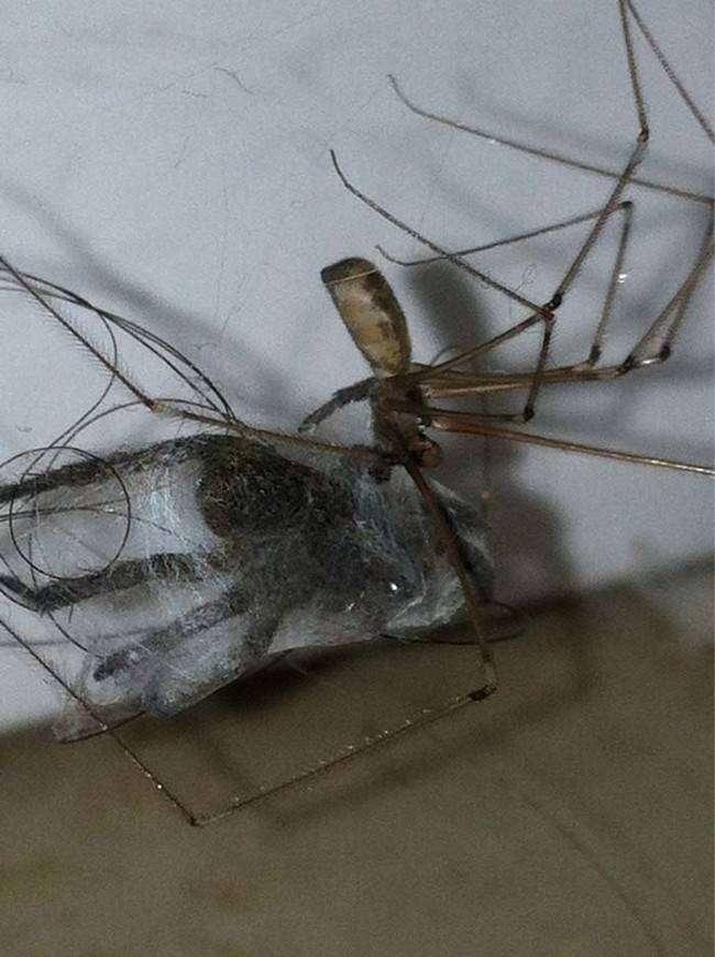 16 ужасающих снимков, которые заставят тебя бояться пауков еще больше (16 фото)