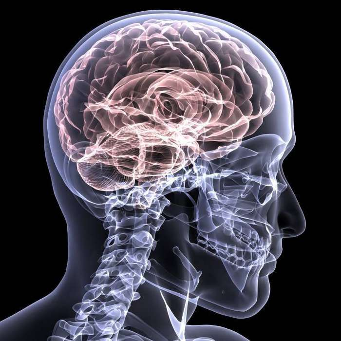 Самые популярные мифы и разоблачающие их факты о мозге